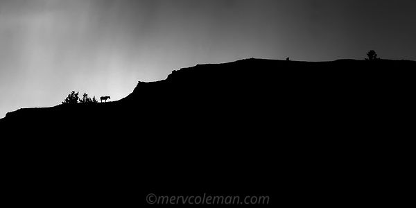 529 Pryor Mountain Silhouette