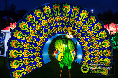 Longleat_Festival_of_Light-38