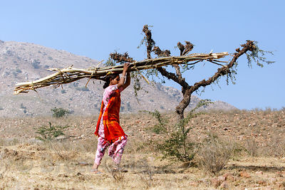 A girl carries branches on her head, Kharekhari village, Rajasthan, India