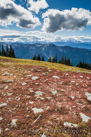 Alpine Tundra in Olympic National Park