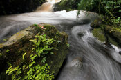Rwanda, Nyungwe forest reserve is a montane rainforest, waterfall