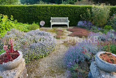 Sunken herb garden includes clumps of thymes, purple sage, lavenders, fennel, sanguisorba and many other plants with medicina...