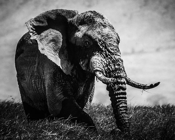 04218-Elephant_in_front_of_the_clouds_Laurent_Baheux