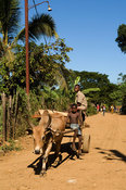 ox cart, Hell-Ville, Nosy Be, Madagascar