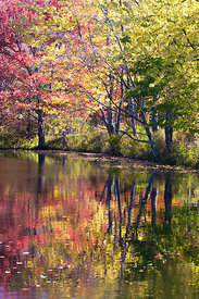 Autumn foliage reflecting in a lake in the Adirondack Mountains, New York