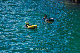 Snorkelers Exploring a Cove of Mendocino Headlands State Park