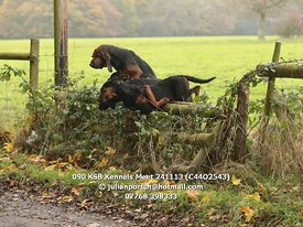 090_KSB_Kennels_Meet_241113_(C44O2543)