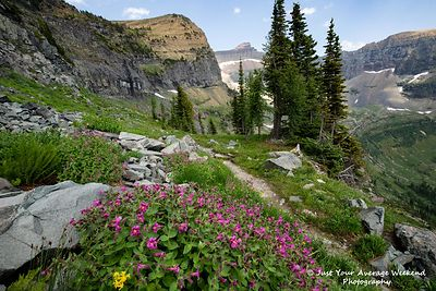 Boulder Pass Monkeyflowers