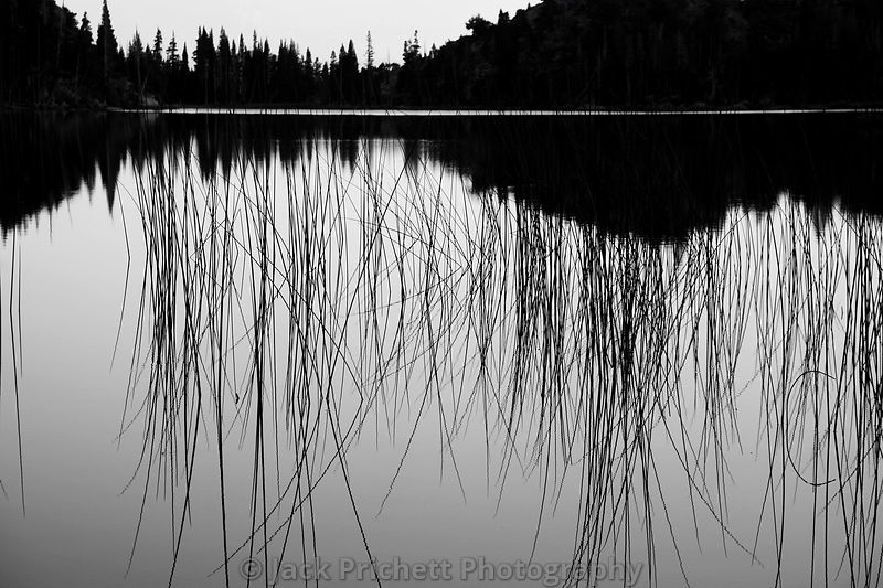 Reeds and water, Fremont Lake