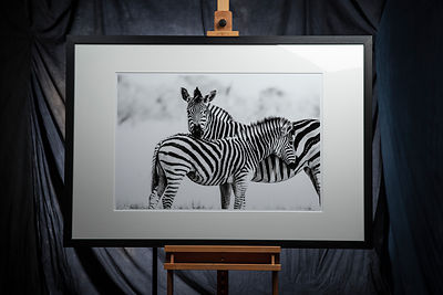 Formal Portrait With Zebra