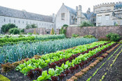 Kitchen garden with colourful rows of lettuces and leeks. Forde Abbey, nr Chard, Dorset, UK