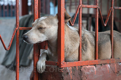 A stray dog sleeps in a temple in the Dharavi slum, Mumbai, India.