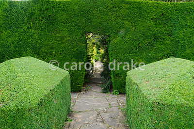 Clipped box frames opening in yew hedge between Leisure Garden and Herbaceous borders. Rodmarton Manor, Rodmarton, Tetbury, G...