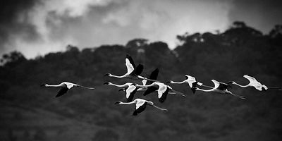 7227-Bird_Laurent_Baheux