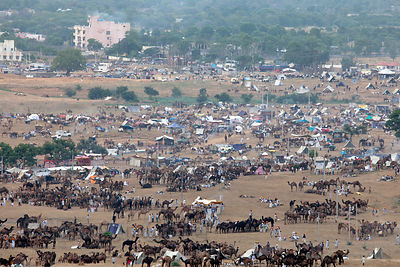 Wide view of the Pushkar camel fair, Rajasthan, India