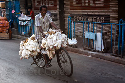 Live chickens are tied to a bicycle and taken to slaughter, Newmarket, Kolkata, India.