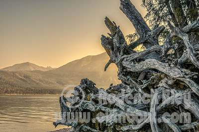 Gnarly Sunrise on Lake McDonald, Glacier National Park