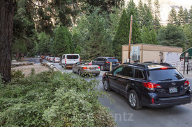 Traffic Jam at Rush Hour in Yosemite National Park