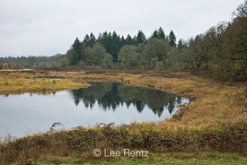 Pond along the Oaks to Wetlands Trail in Ridgefield National Wildlife Refuge, Ridgefield, Washington, USA, November, 2008_WA_...