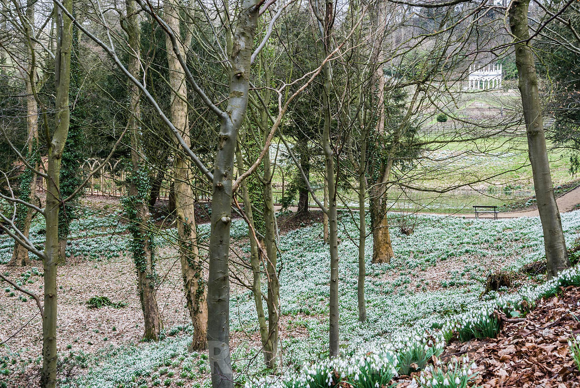 The Exedra glimpsed above the snowdrop wood. Painswick Rococo Garden, Painswick, Glos, UK