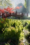 A red Nikko bridge spans a tributary of the River Avon in the Japanese garden at Heale House, Middle Woodford, Wiltshire with ferns and Gunnera manicata fringing streams in the foreground