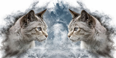 Art-Digital-Alain-Thimmesch-Chat-20