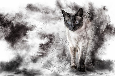 Art-Digital-Alain-Thimmesch-Chat-28