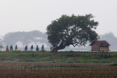 Distant view of a group of women in saris walking on a footpath in the East Kolkata Wetlands, Kolkata, India.