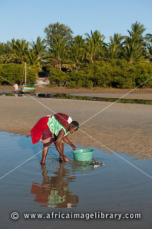 Woman washing fish on the beach, Vilanculos, Mozambique