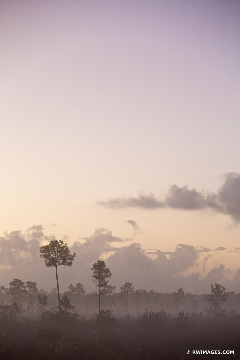 DAWN EVERGLADES NATIONAL PARK FLORIDA VERTICAL