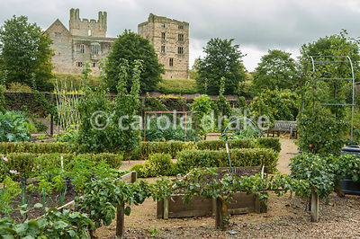 Area devoted to vegetable growing for the cafe, and for community allotments, with dramatic backdrop of Helmsley Castle. Helm...