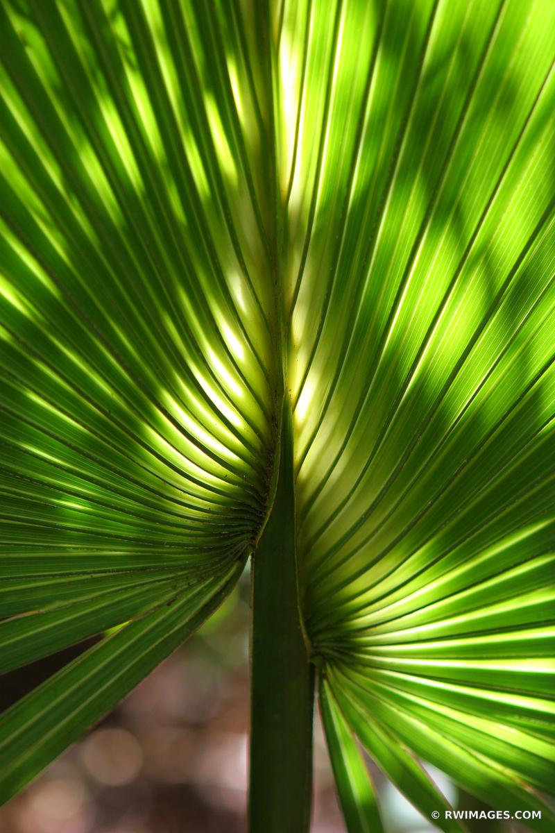 146-4060 cabbage palm