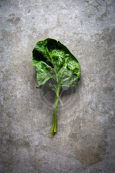 Fresh spinach leaf over grey concrete background with copy space