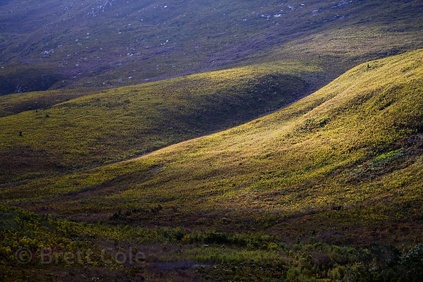 "Late light on fynbos vegetation in the ""Hidden Valley,"" a remote section of the Langeberg Mountains in the Wildcliff Nature R..."
