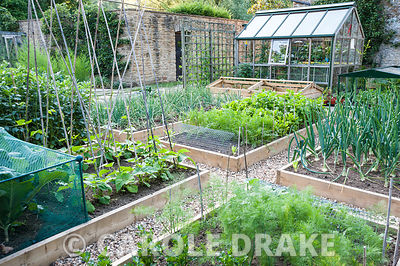 Vegetable plot features raised beds edged with timber, full of parsnips, carrots, onions and all sorts of beans and peas. Mil...