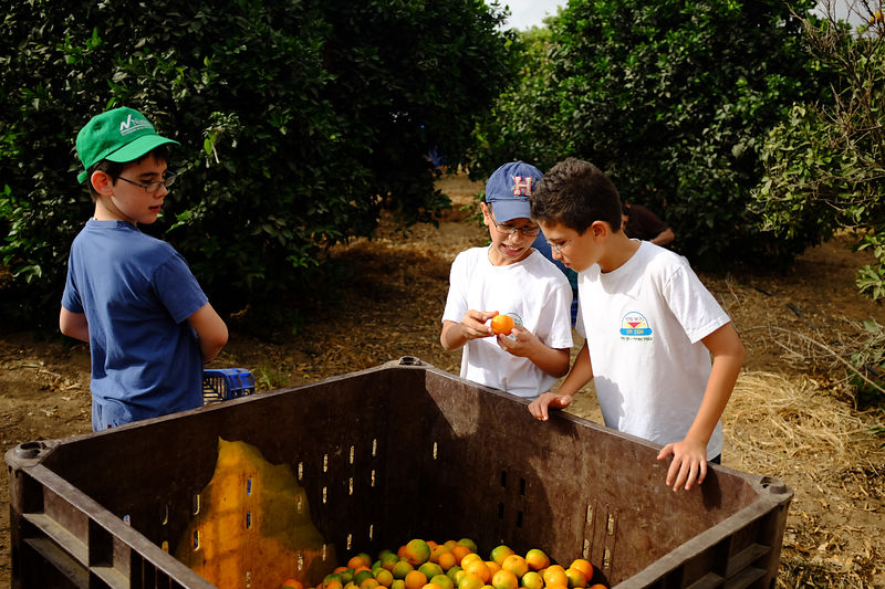 Volunteers Leket-israel on the global food day