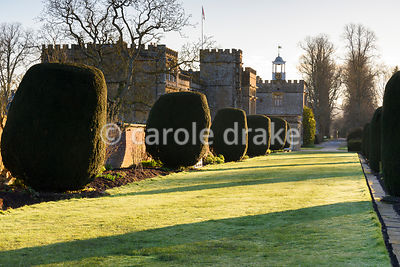 Yew avenue casting shadows in the dawn sunlight in early April at Forde Abbey