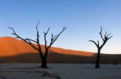 Tree skeletons, Dead Vlei, Namib-Naukluft National Park, Namibia