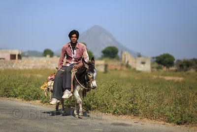 A man rides a donkey along a country road, Kharekhari village, Rajasthan, India