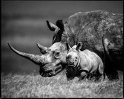 44617-Baby_rhino_and_mum_Kenya_2013_Laurent_Baheux