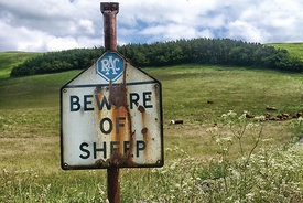 Beware of SHEEP