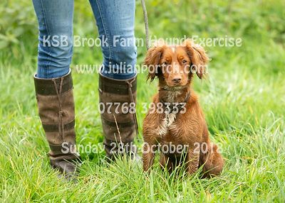 2018-10-28 KSB Brook Farm Hound Exercise