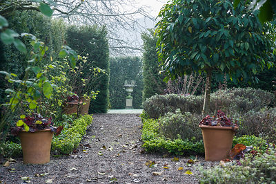 The Knot Garden, newly planted with Ilex crenata to replace diseased box plants, features standard Prunus lusitanica, Portuge...