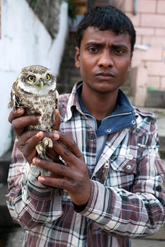A likely con-man holds an owl at Assi Ghat, Varanasi, India. He was telling tourists he would permanently set the owl free fo...