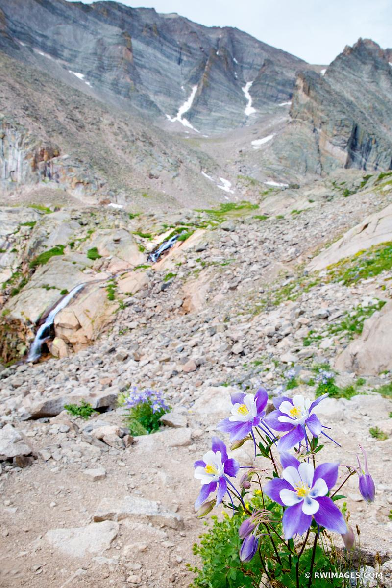 COLUMBINE FLOWER AND COLUMBINE FALLS CHASM LAKE TRAIL ROCKY MOUNTAIN NATIONAL PARK COLORADO COLOR VERTICAL