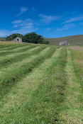 Freshly mowed upland meadow in the Yorkshire Dales, UK.