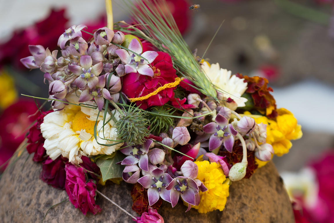 Flowers and wheat adorn a small stone idol in a Hindu temple during Mahashivaratri (Shiva's birthday), Pushkar, Rajasthan, India