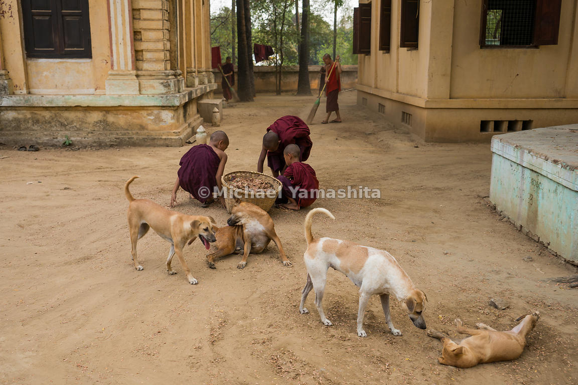 Novice monks complete morning chores at Lawkananda Pagoda in Bagan. Monasteries can act as social safety nets for orphans or ...