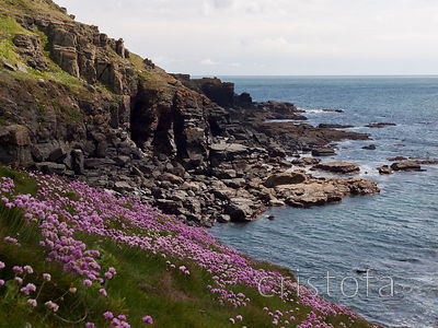 cliffs by the Lizard with sea pinks