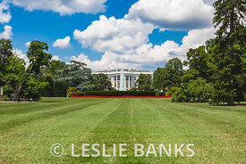 White House in Summer